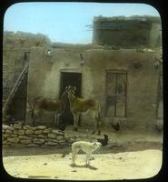 Thumbnail for Burros at door. Mishongovi. 1918: C41