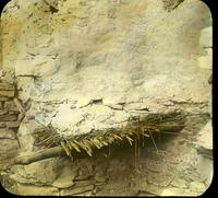 Thumbnail for Frijoles Ceremonial cave. Old roof construction, fragment: D12